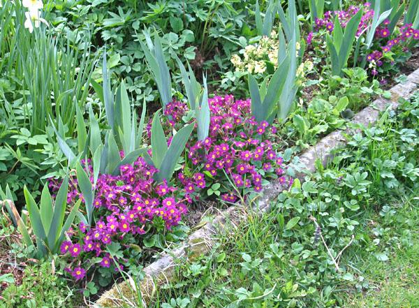 Ленивый Дачник - Примулы в саду