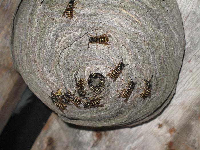 осиное гнездо скачать торрент